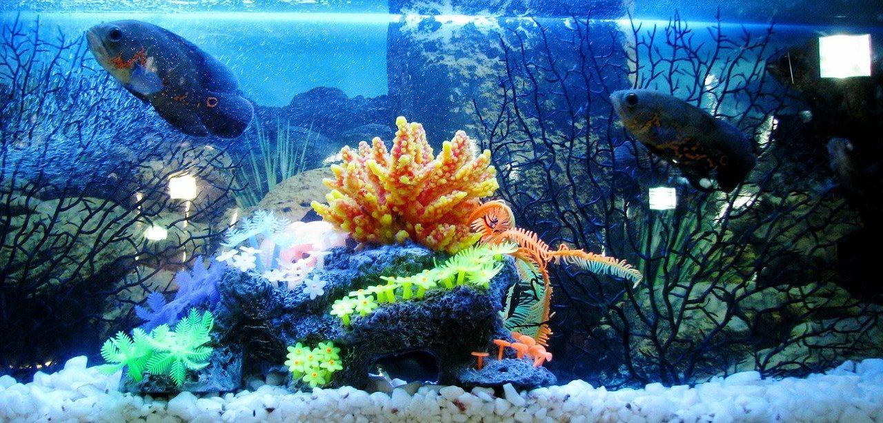 Aquarium Water Column
