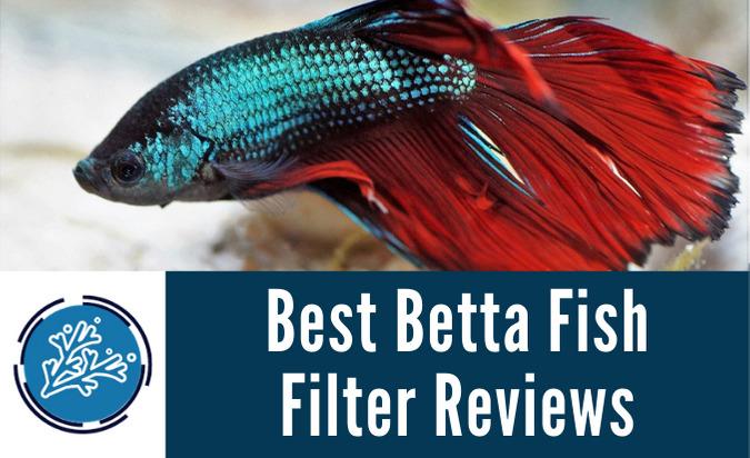 Best Betta Fish Filter Reviews