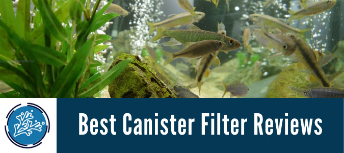 Best Canister Filter Reviews