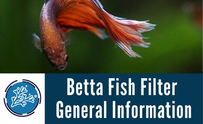 Betta Fish Filter General Information
