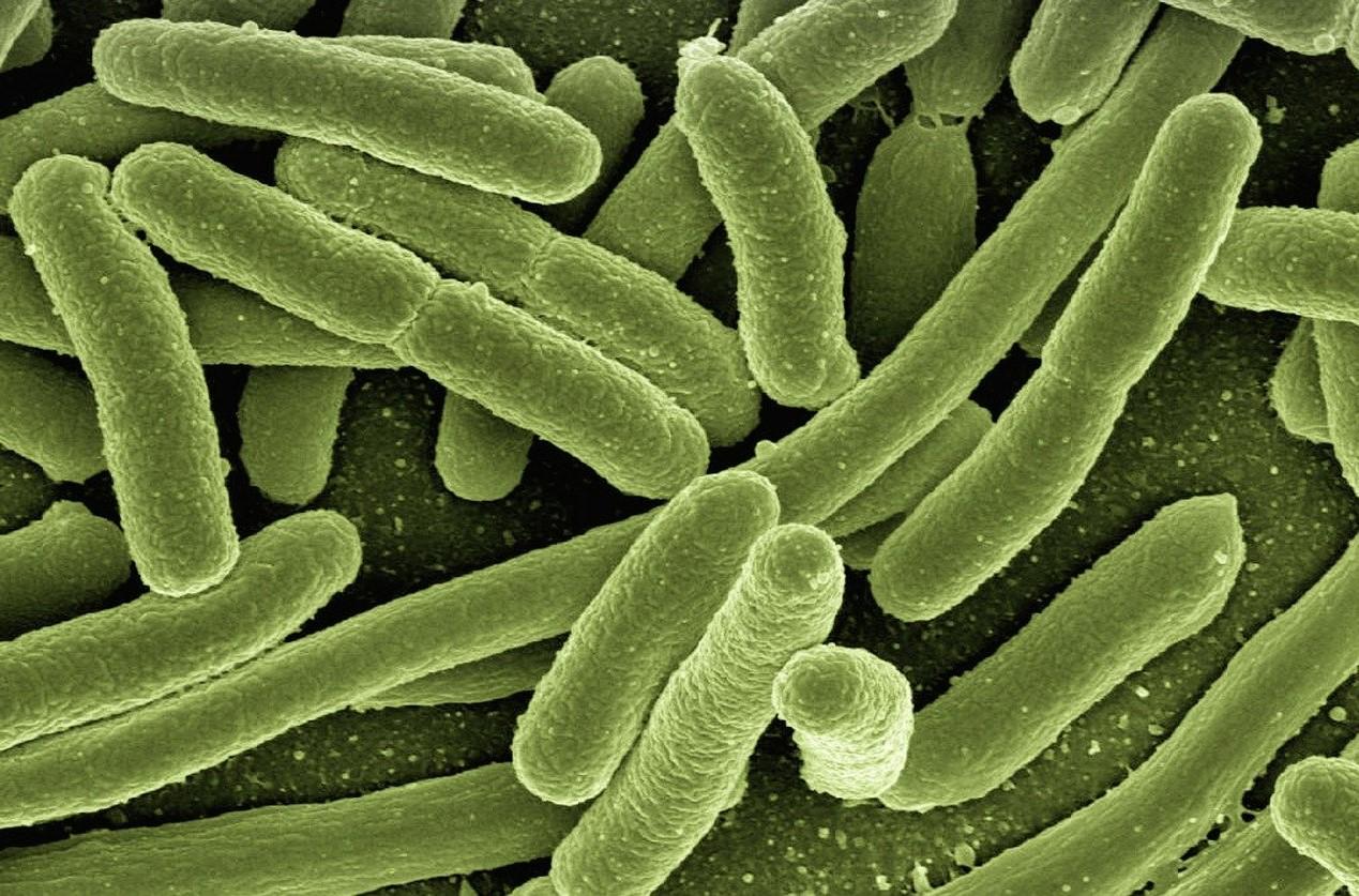 Biological Filtration