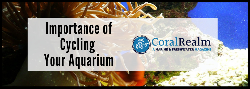 Importance of Cycling Your Aquarium