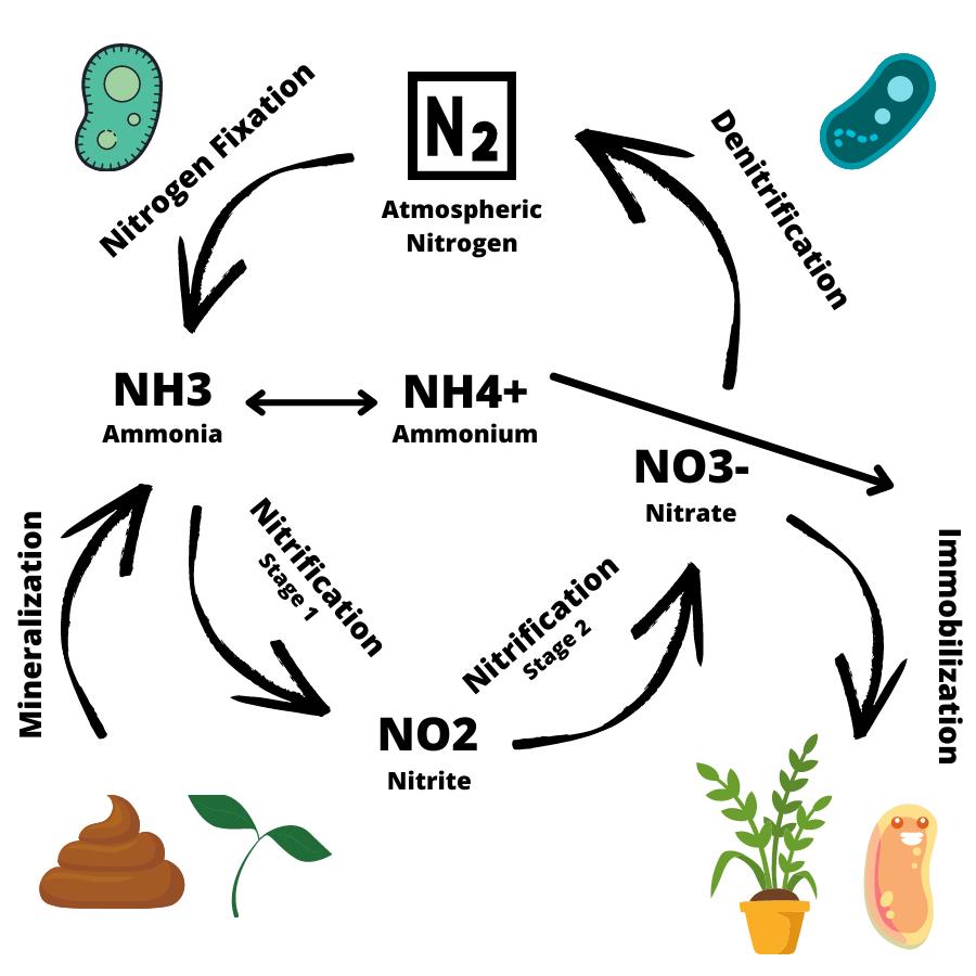 Nitrogen Cycle Aquarium Diagram