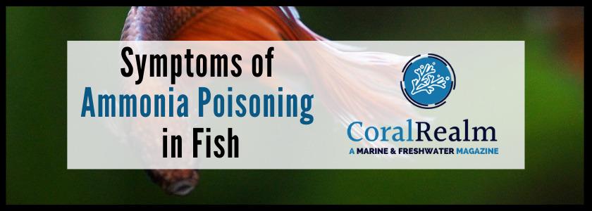 Symptoms of Ammonia Poisoning in Fish