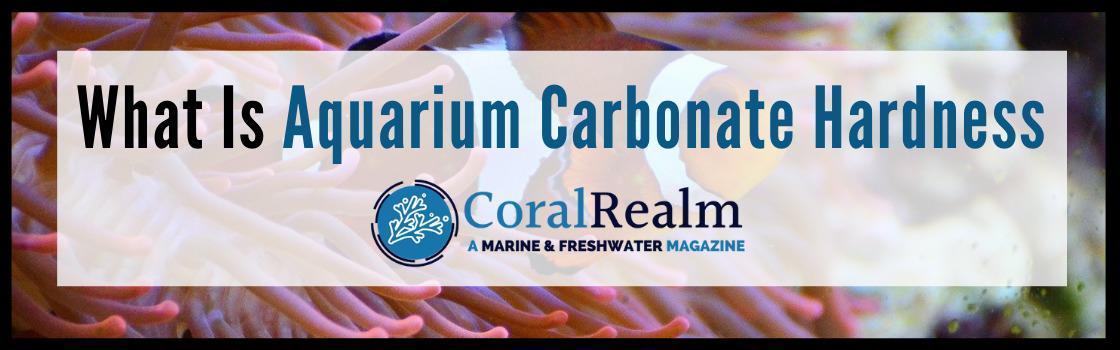 What Is Aquarium Carbonate Hardness