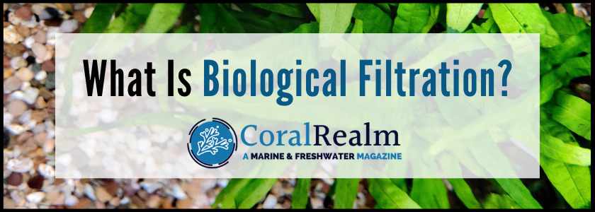 What Is Biological Filtration