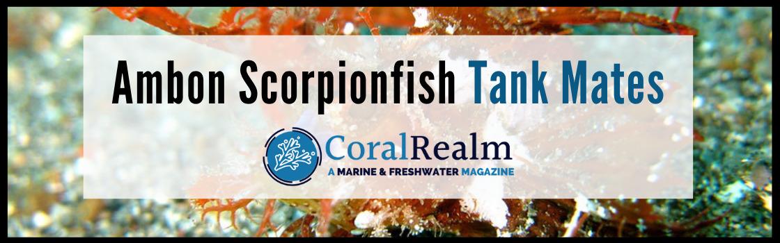 Ambon Scorpionfish Tank Mates