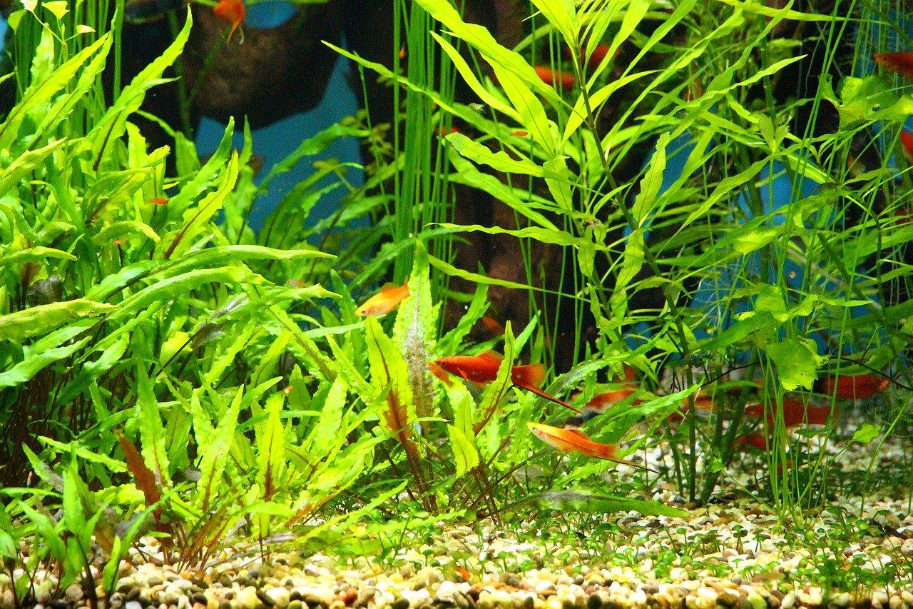 Aquarium Plant Fertilizer