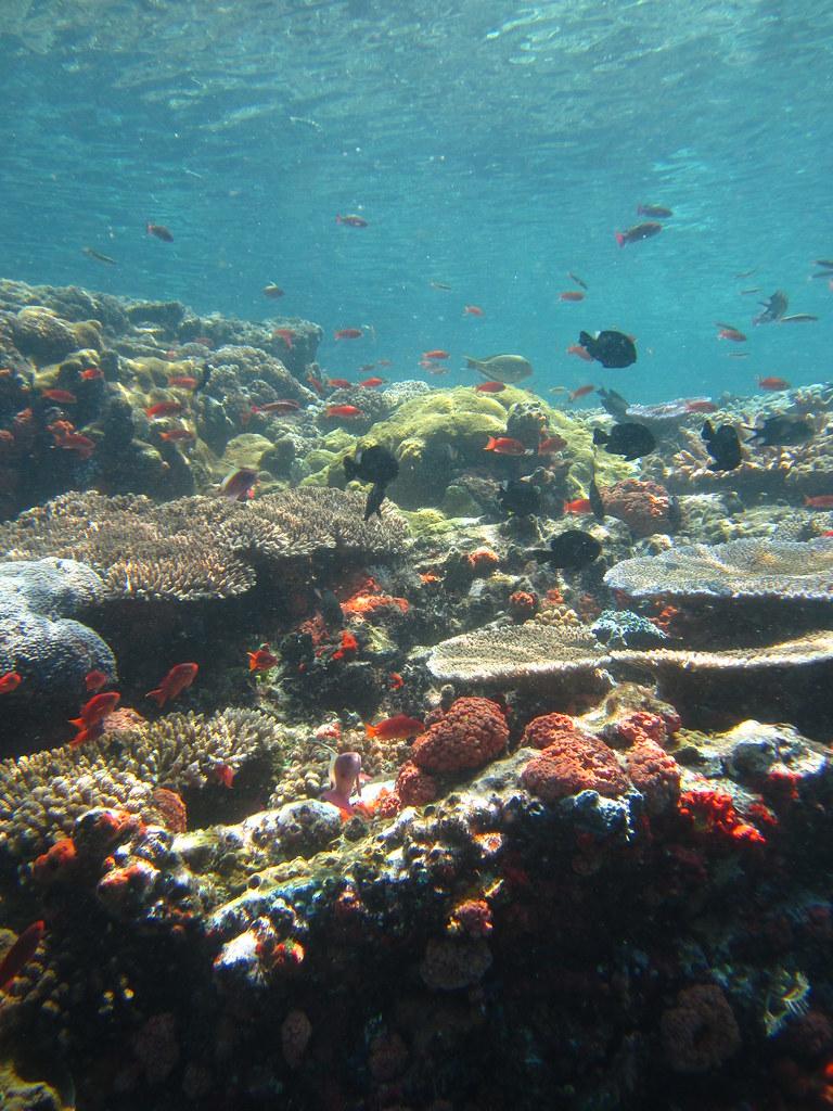 Batu Bolong Komodo Diving Site