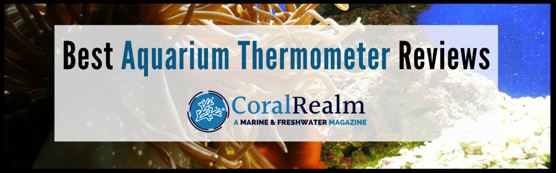 Best Aquarium Thermometer Reviews