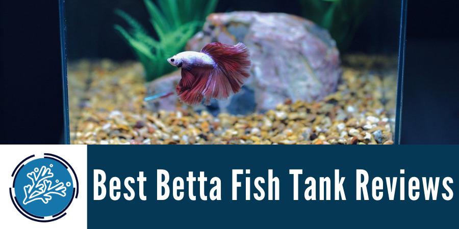 Best Betta Fish Tank Reviews