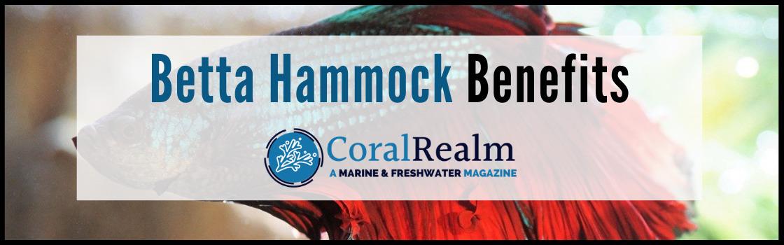 Betta Hammock Benefits