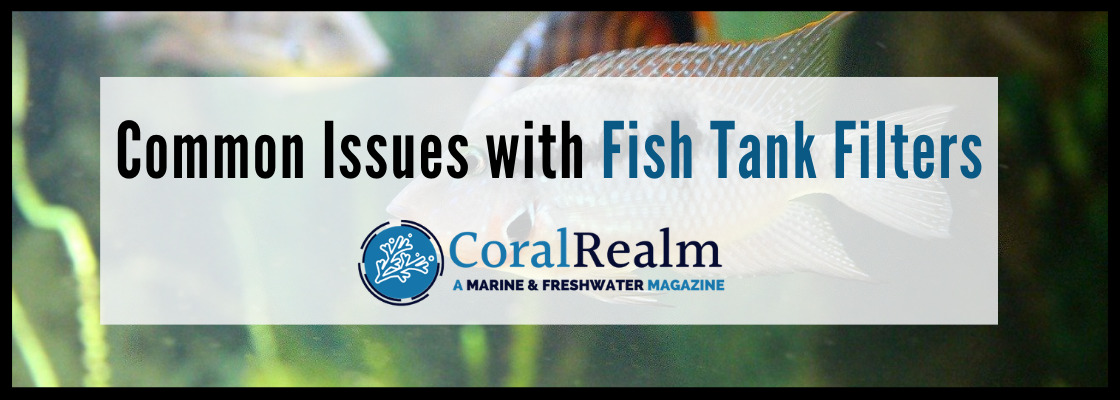 Common Issues with Fish Tank Filters