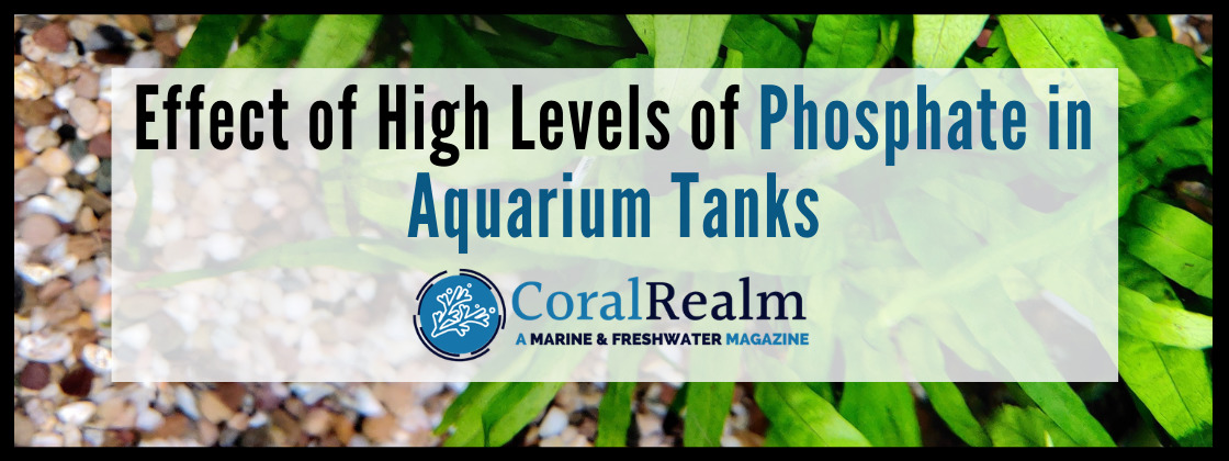 Effect of High Levels of Phosphate in Aquarium Tanks