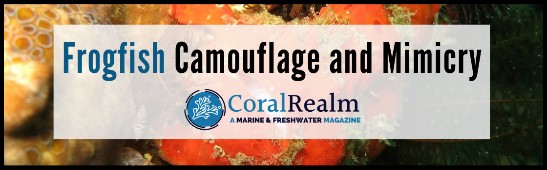 Frogfish Camouflage and Mimicry