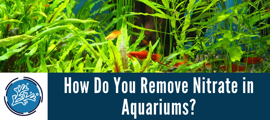 How Do You Remove Nitrate in Aquariums
