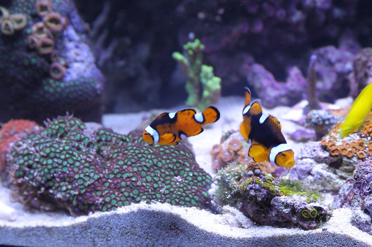 How To Clean Aquarium Filter