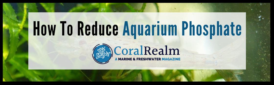 How To Reduce Aquarium Phosphate