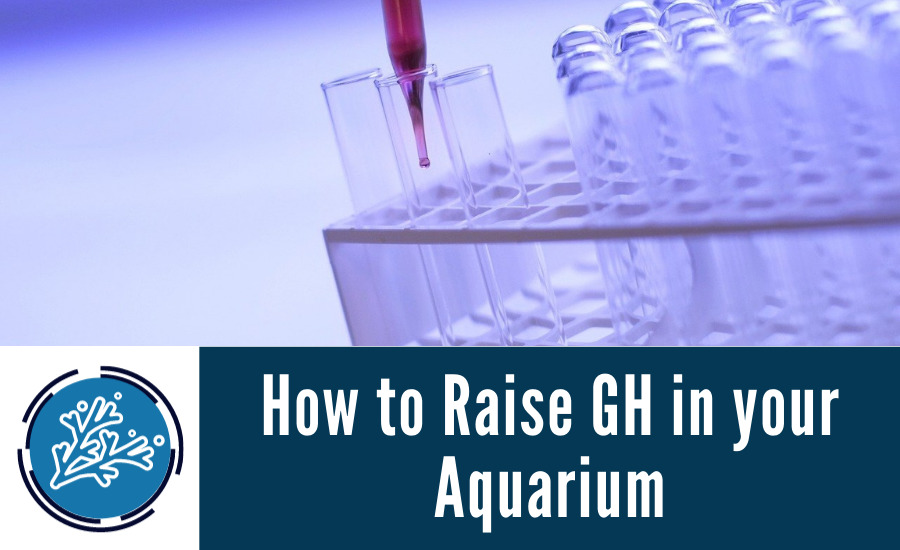 How to Raise GH in your Aquarium