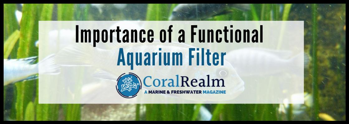Importance of a Functional Aquarium Filter