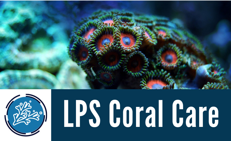 LPS Coral Care