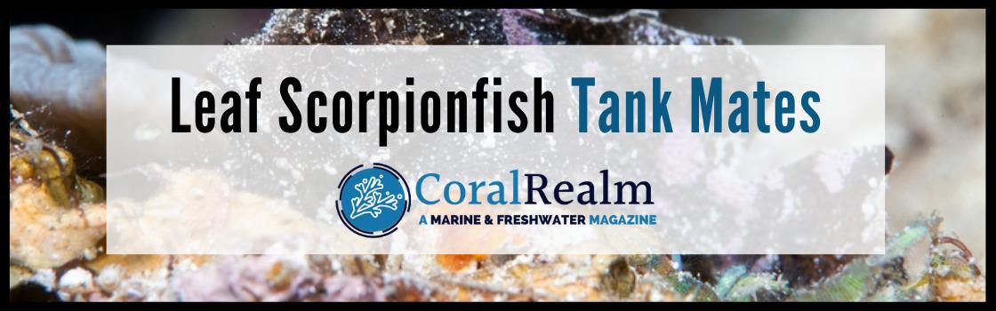 Leaf Scorpionfish Tank Mates