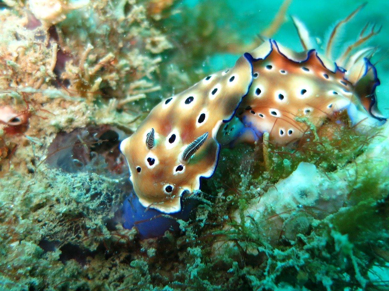 Nudibranch aquarium