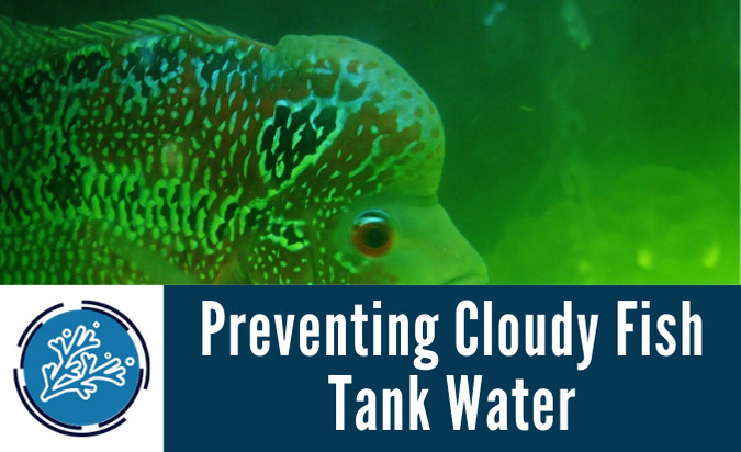 Preventing Cloudy Fish Tank Water