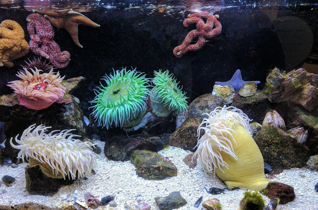 Sea anemone care