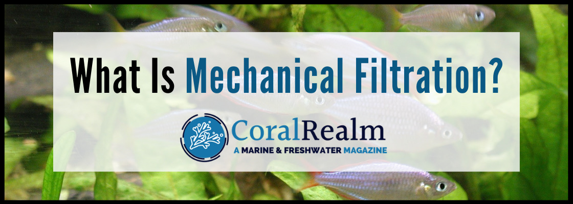 What Is Mechanical Filtration