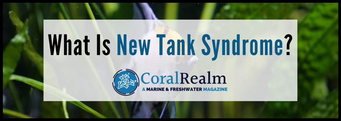 What Is New Tank Syndrome