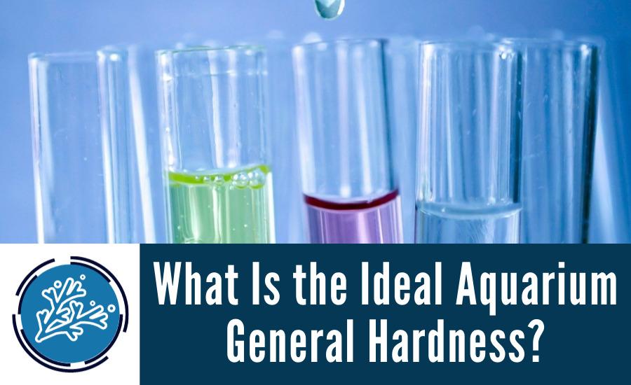 What Is the Ideal Aquarium General Hardness