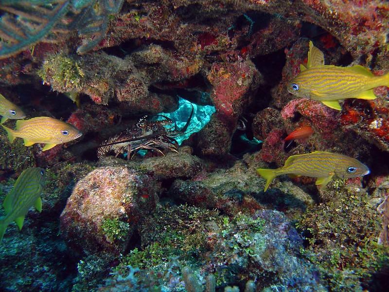 banco chinchorro diving