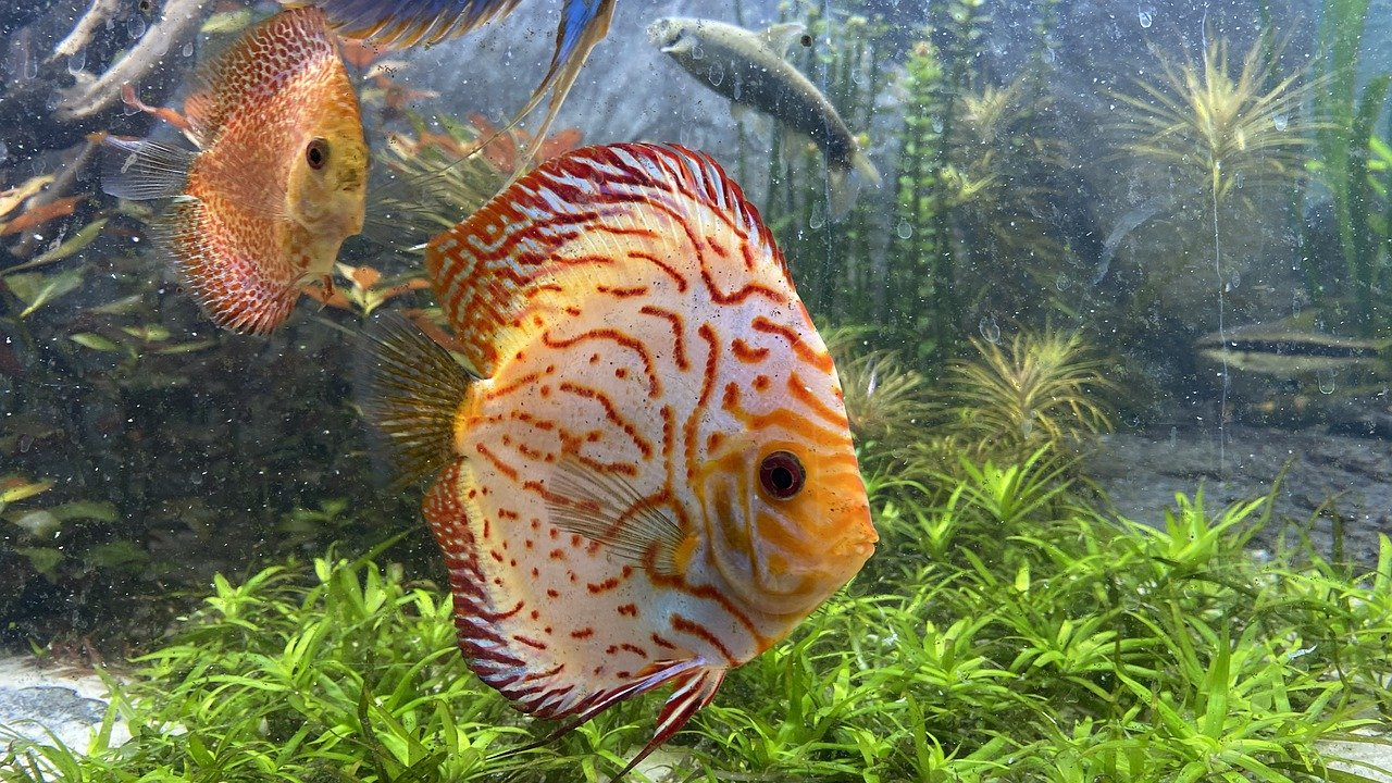 fish tank filter not working