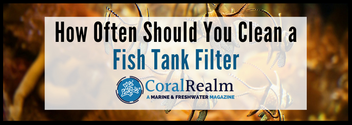how often to clean fish tank filter