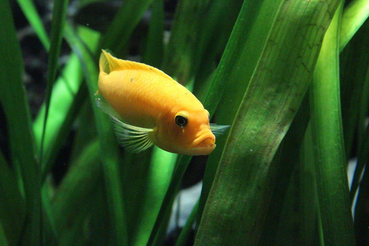 phosphate in aquarium