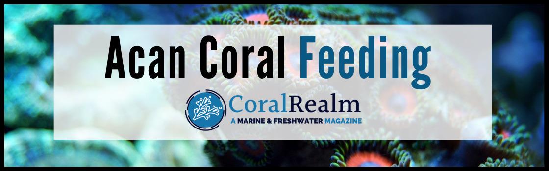 Acan Coral Feeding