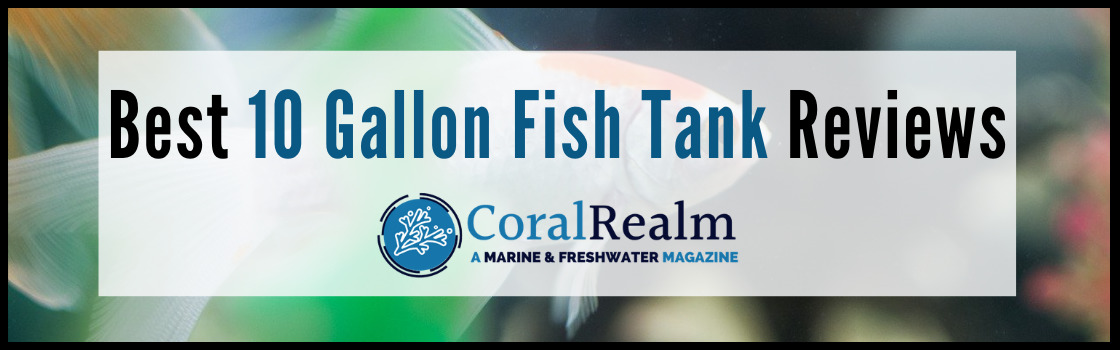 Best 10 Gallon Fish Tank Reviews