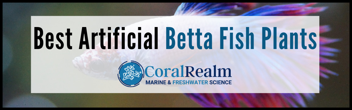 Best Artificial Betta Fish Plants