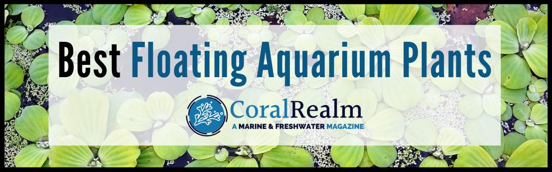 Best Floating Aquarium Plants