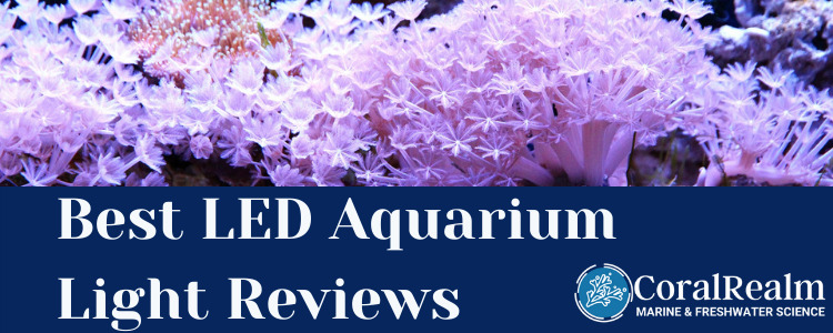 Best LED Aquarium Light Reviews