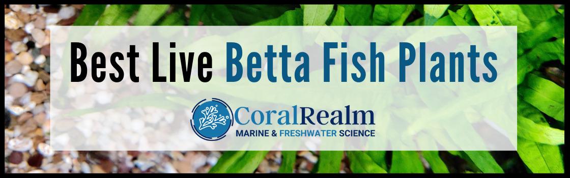 Best Live Betta Fish Plants