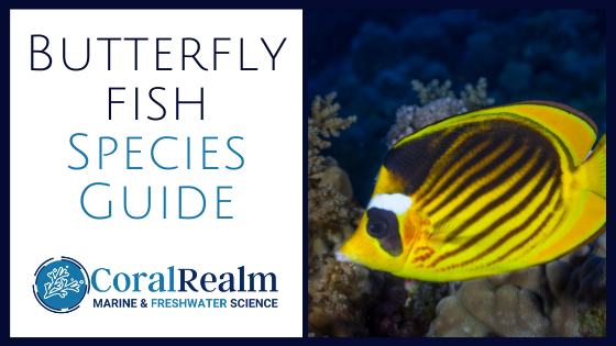 Butterfly fish guide