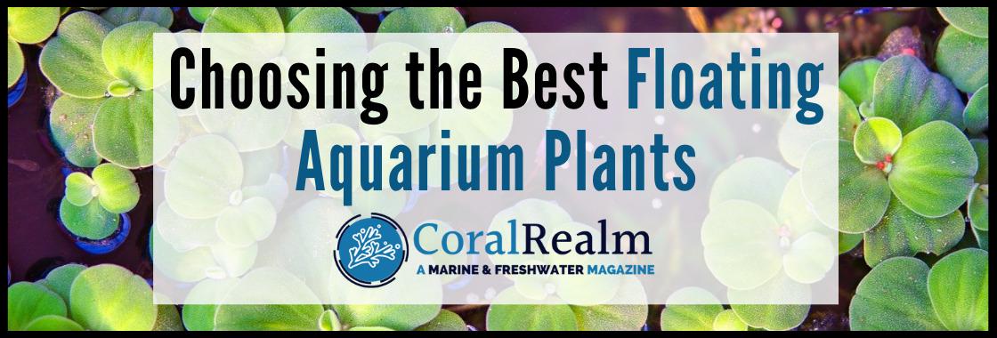 Choosing the Best Floating Aquarium Plants