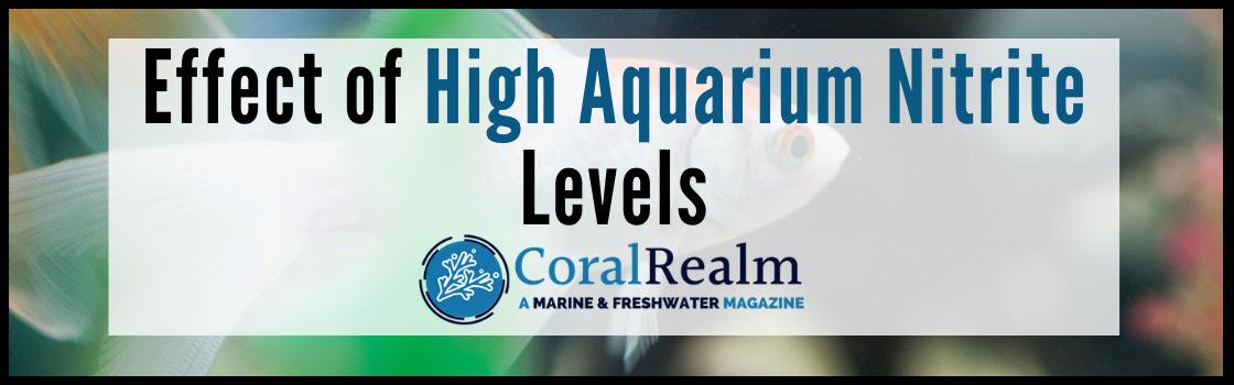 Effect of High Aquarium Nitrite Levels