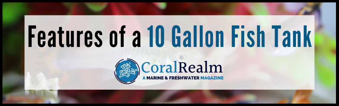 Features of a 10 Gallon Fish Tank
