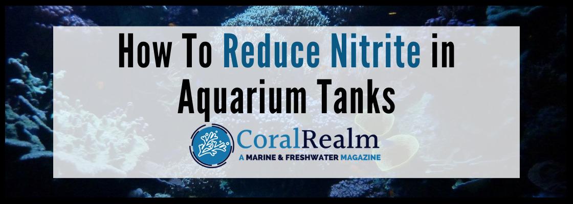 How To Reduce Nitrite in Aquarium Tanks