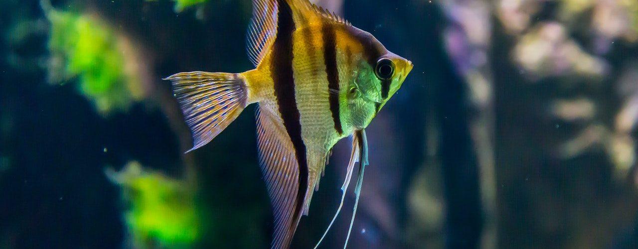 nitrite in aquarium