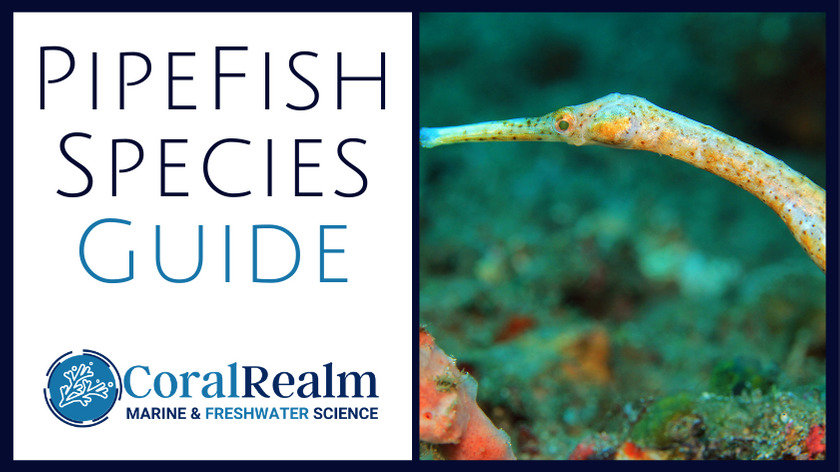 pipefish guide