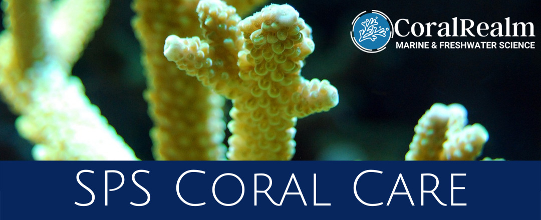 SPS Coral Care